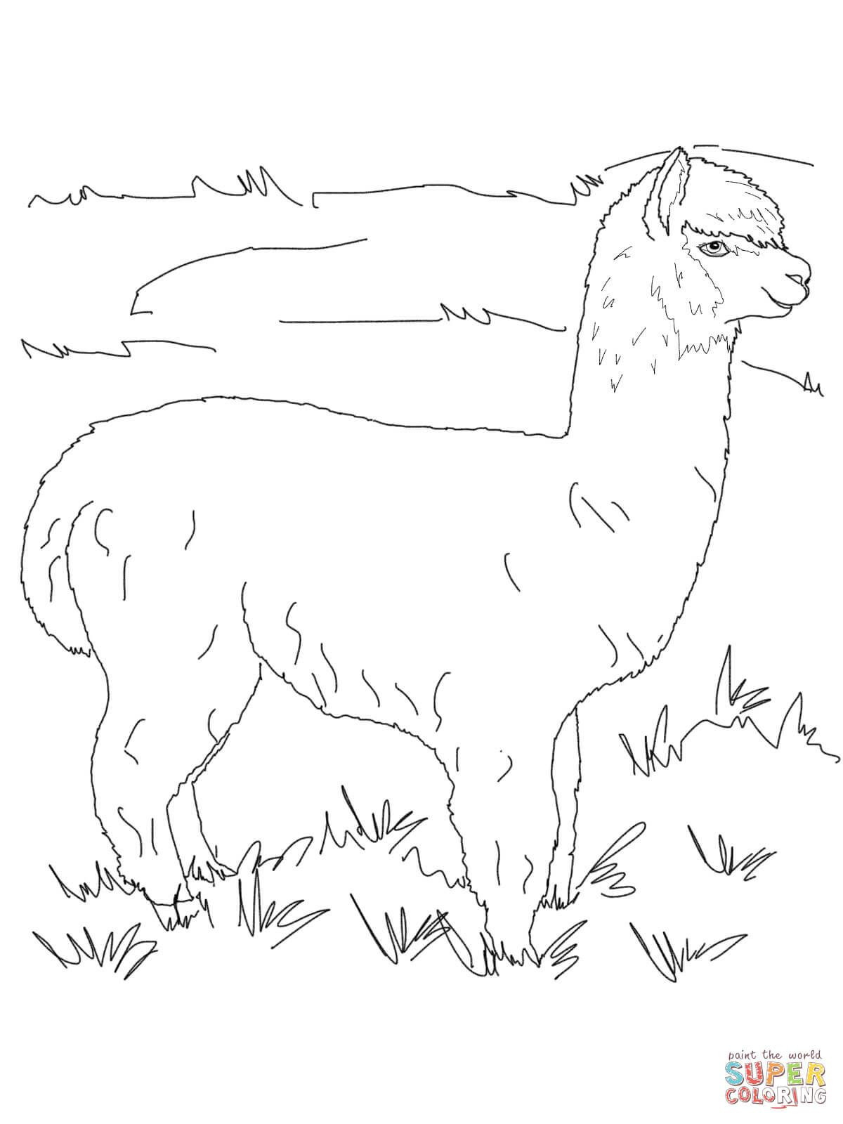 Shamu Coloring Pages Boer Goat Coloring Pages Fresh Coloring Pages Shamu Simplified
