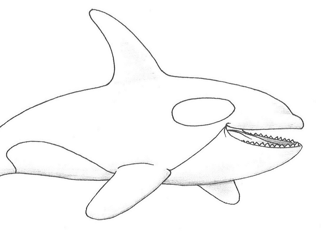 Shamu Coloring Pages Killer Whale Coloring Pages