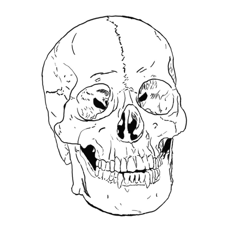 Skull Color Pages Coloring Pages Bones Of The Skull Coloring Pages Picture